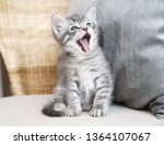 Stock photo kitten sings the kitten screams the kitten laughs 1364107067