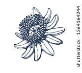 tropical passion fruit flower... | Shutterstock .eps vector #1364164244