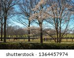 kentucky equine landscape | Shutterstock . vector #1364457974