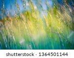 beautiful close up ecology... | Shutterstock . vector #1364501144