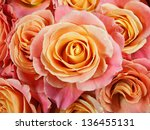 Closeup Colorful Roses  Pink ...