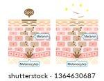 mechanism of skin cell turnover ... | Shutterstock .eps vector #1364630687