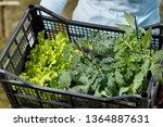 seedlings collection prepared... | Shutterstock . vector #1364887631