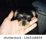snout dog in hand   Shutterstock . vector #1365168854