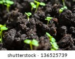 Mustard Sprout Macro Close Up...