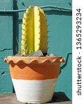 closeup yellow color of cereus... | Shutterstock . vector #1365293234