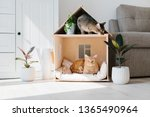 Two Cats In Wooden Cat House...