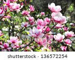 Beautiful Trees In Bloom With...