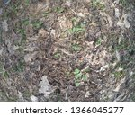 forest glade with needles.   Shutterstock . vector #1366045277