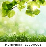 natural green background with... | Shutterstock . vector #136609031