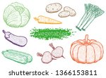 vegetables. cabbage  carrot ... | Shutterstock .eps vector #1366153811