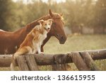 Stock photo red border collie dog and horse together at sunset in summer 136615955