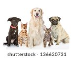Stock photo large group of cats and dogs in front looking at camera isolated on white background 136620731