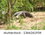 barcelona  spain. the giant...   Shutterstock . vector #1366261934