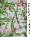 fresh  green asparagus  flatlay ...   Shutterstock . vector #1366309331