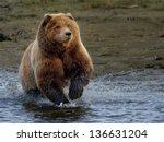 Brown Bear At Lake Clark...