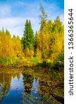 Autumn forest pond view. autumn ...
