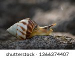the life of white snails in the ... | Shutterstock . vector #1366374407