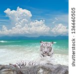 White Tiger On The Rock Over...