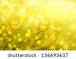 Field flowers/buttercup. yellow flower/spring background - stock photo