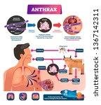 anthrax vector illustration....   Shutterstock .eps vector #1367142311