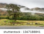 Mist Rises Into Clouds From Th...