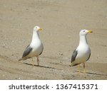 Pair Of Seagulls On The Beach...
