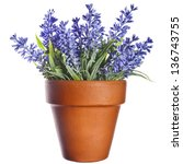 Lavender Plant In Pottery Clay...