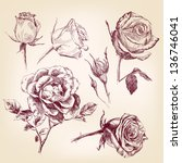 roses hand drawn vector... | Shutterstock . vector #136746041