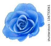 One Blue Rose Head With Water...