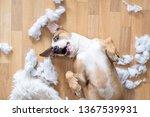 playful dog among torn pieces... | Shutterstock . vector #1367539931