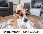 a dog destroying a fluffy... | Shutterstock . vector #1367539934