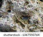 big sea rock on the seashore   Shutterstock . vector #1367550764