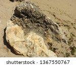 big sea rock on the seashore   Shutterstock . vector #1367550767