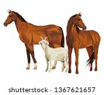 Stock vector horse and goat 1367621657