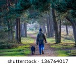 Stock photo walking a dog in new forest in the evening 136764017