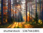 fall. fall forest. forest... | Shutterstock . vector #1367661881