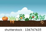 vegetable garden. eps 10 vector ... | Shutterstock .eps vector #136767635