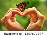 Beautiful Butterfly On A Heart...
