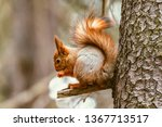 small squirrel sits on the tree ... | Shutterstock . vector #1367713517