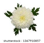 beautiful white daisy flower... | Shutterstock . vector #1367910857