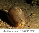 geography cone  conus...   Shutterstock . vector #1367918291
