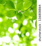 green leaves over green... | Shutterstock . vector #136808864