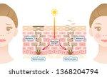 mechanism of skin cell turnover ... | Shutterstock .eps vector #1368204794