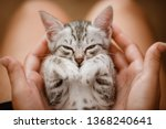 Stock photo little cute home gray striped kitten in hand cute little kitten with owner at home closeup very 1368240641