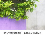 violet and white wall... | Shutterstock . vector #1368246824