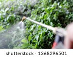 spraying herbicide from the...