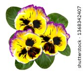 realistic pansy vector flower.... | Shutterstock .eps vector #1368342407