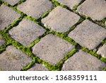 moss  bryophyta   vivid green...   Shutterstock . vector #1368359111