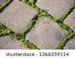 moss  bryophyta   vivid green...   Shutterstock . vector #1368359114